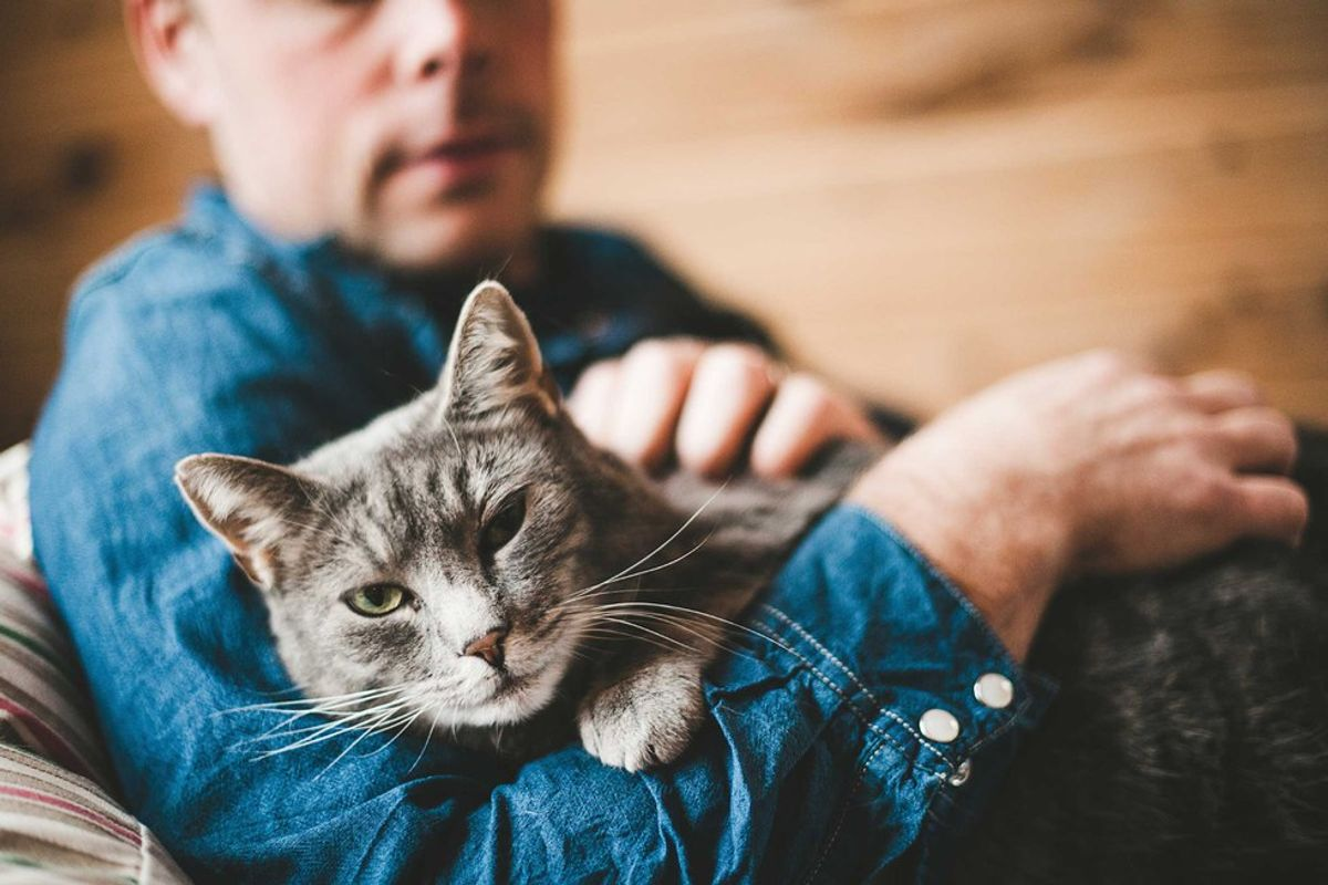 5 Reasons To Love Owning A Cat