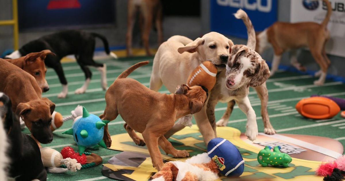 Who's pumped for PUPPY BOWL XIII?