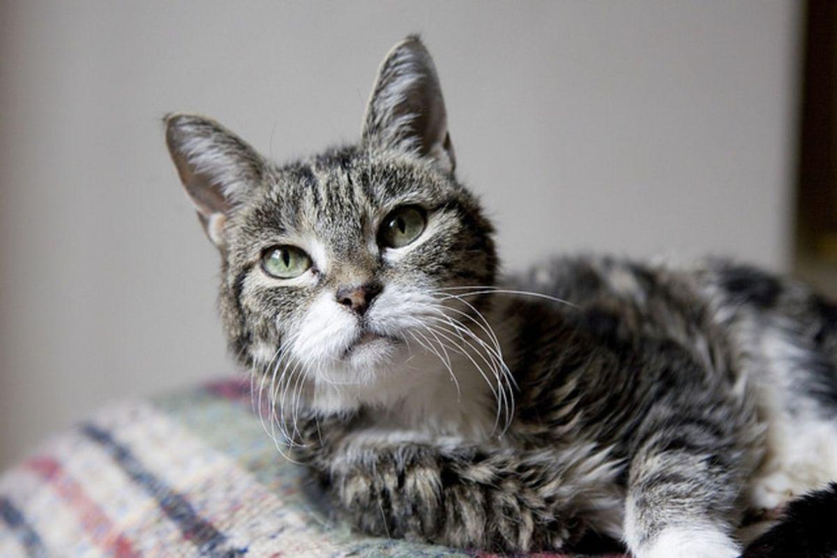 The Importance Of Loving Senior Pets