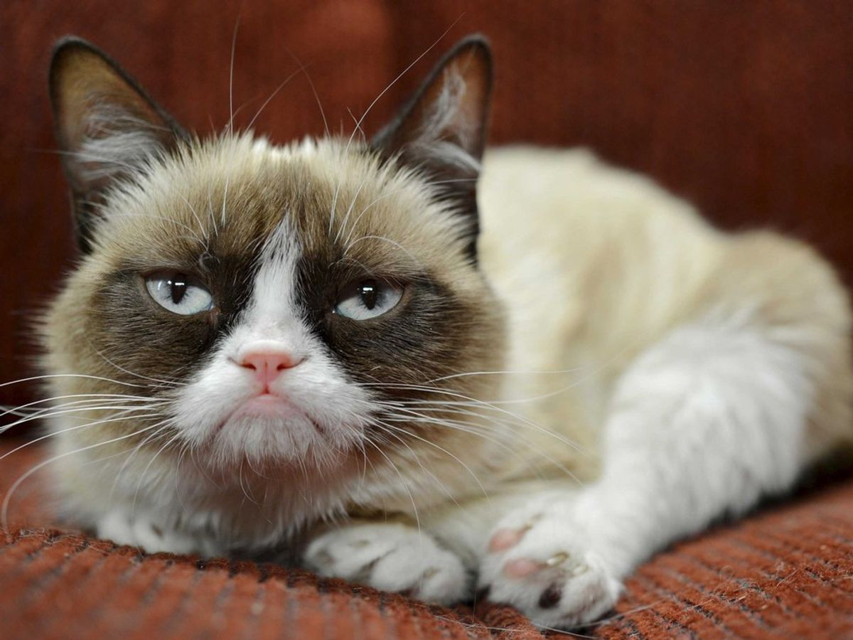 Top Five Epic Cats Of The Net