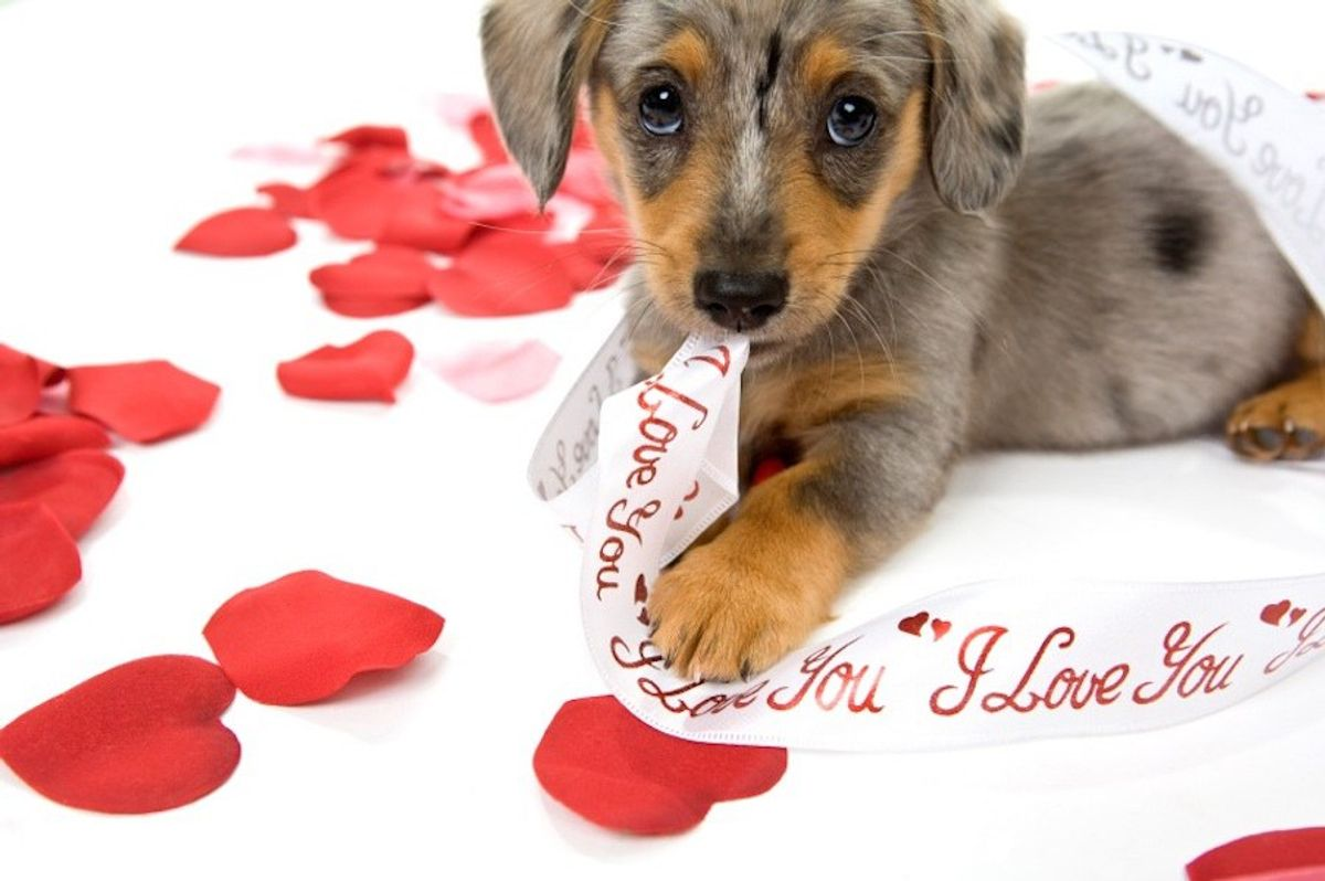 14 Puppies That Are Better Than Any Valentine