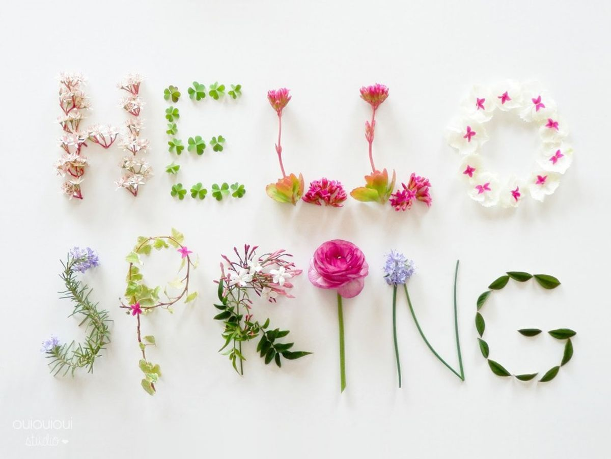 The Spring Break Experience