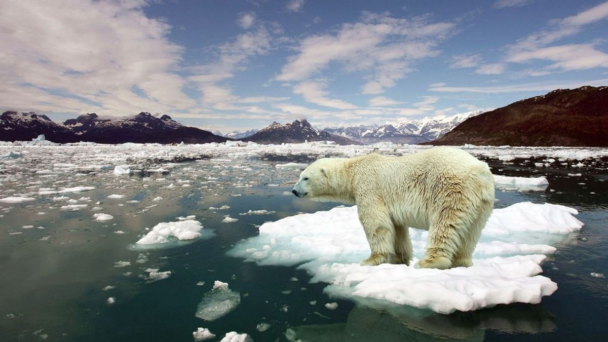 How Climate Change Continues to Impact Our Environment