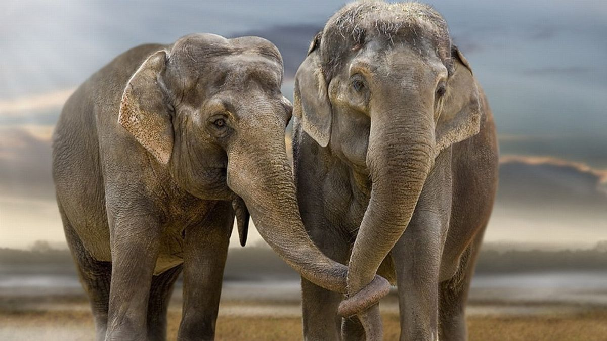 Why Are Elephants Taken For Granted