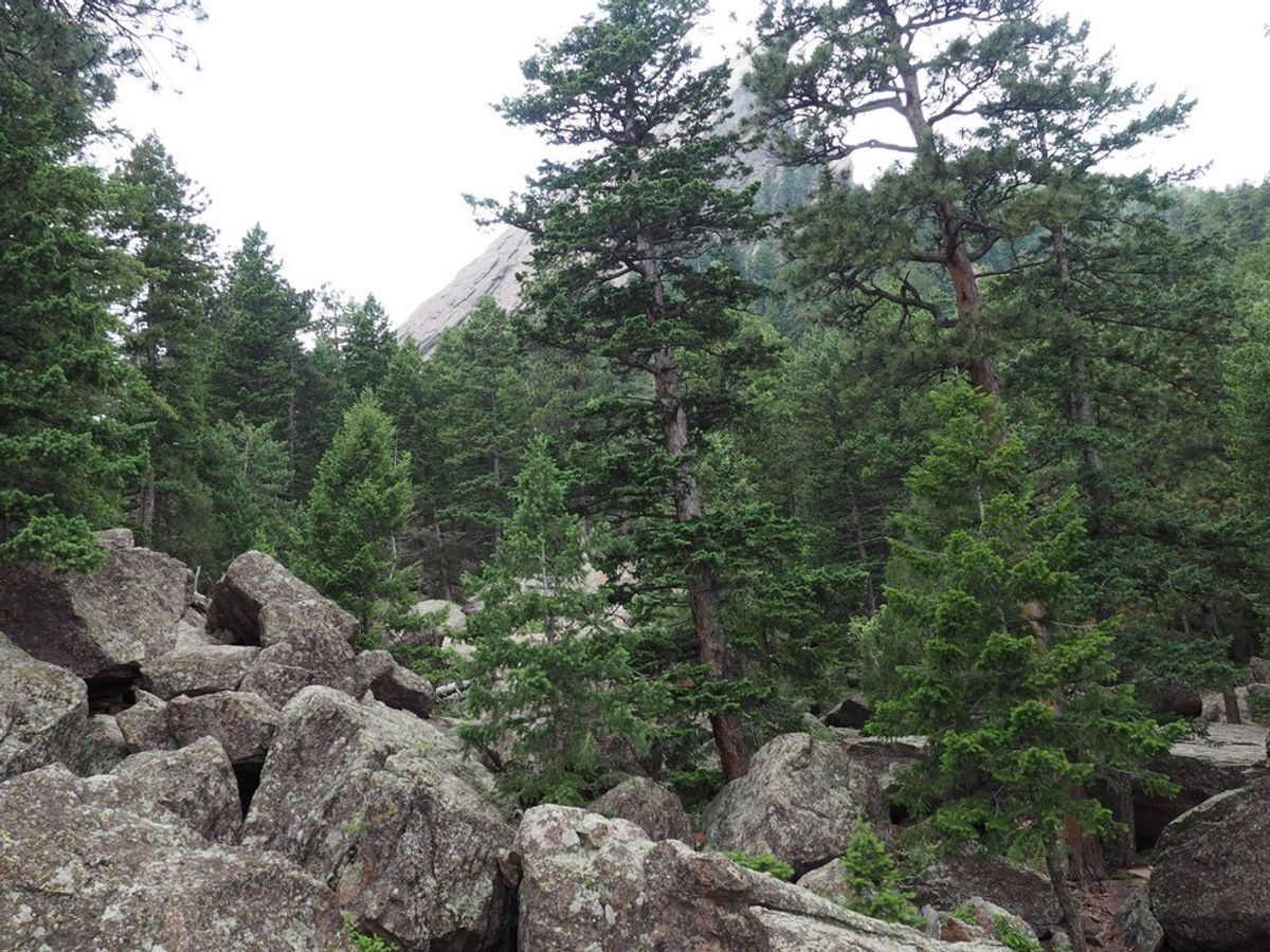 The Therapeutic Powers Of A Hike
