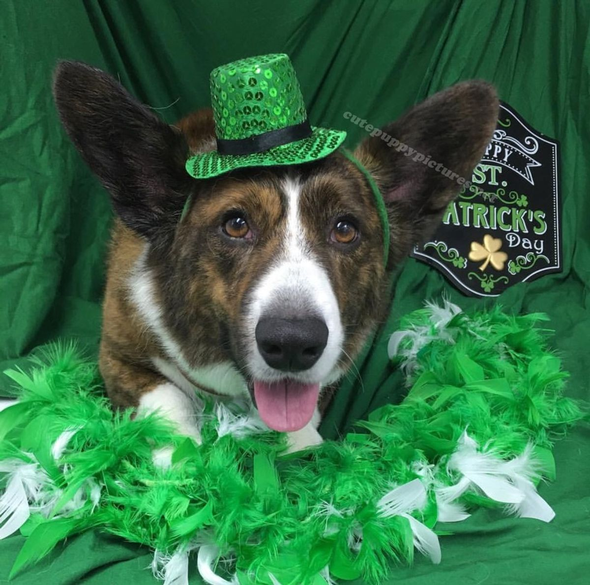 26 St. Patrick's Day Facts And Trivia