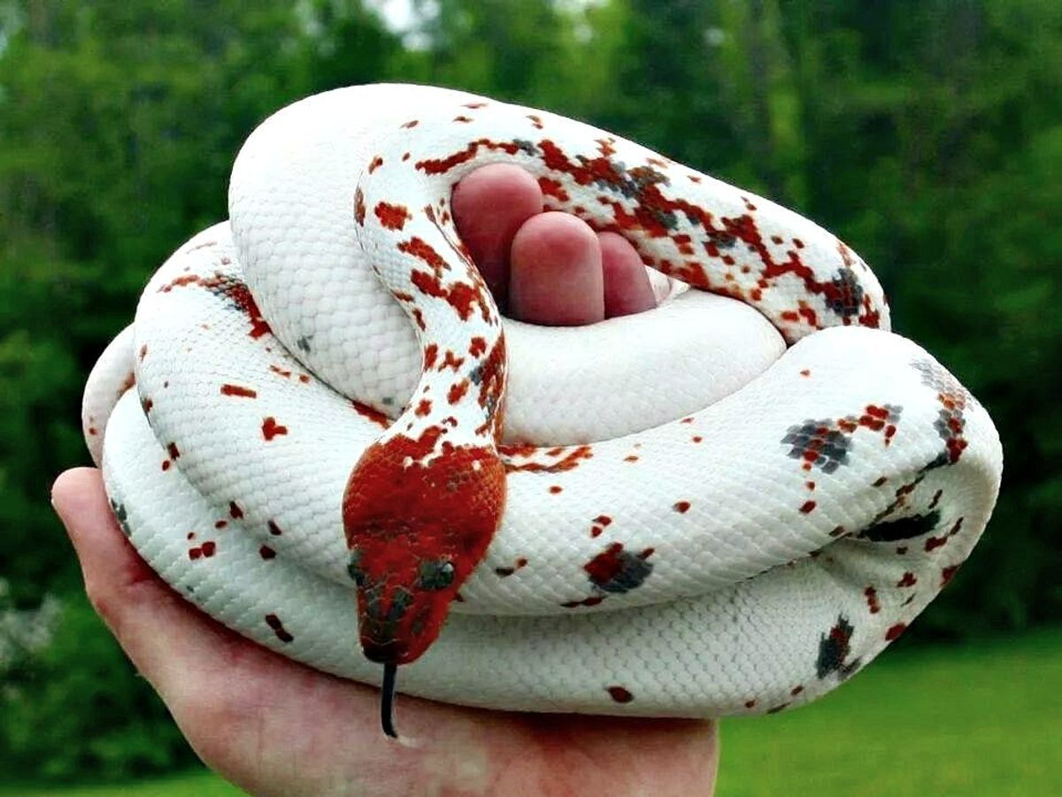 10 Reasons To Get Over Your Fear Of Snakes
