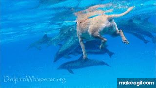 dog and dolphin