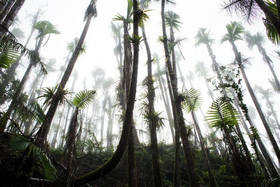 Forests protect the climate. A future with more storms would mean trouble