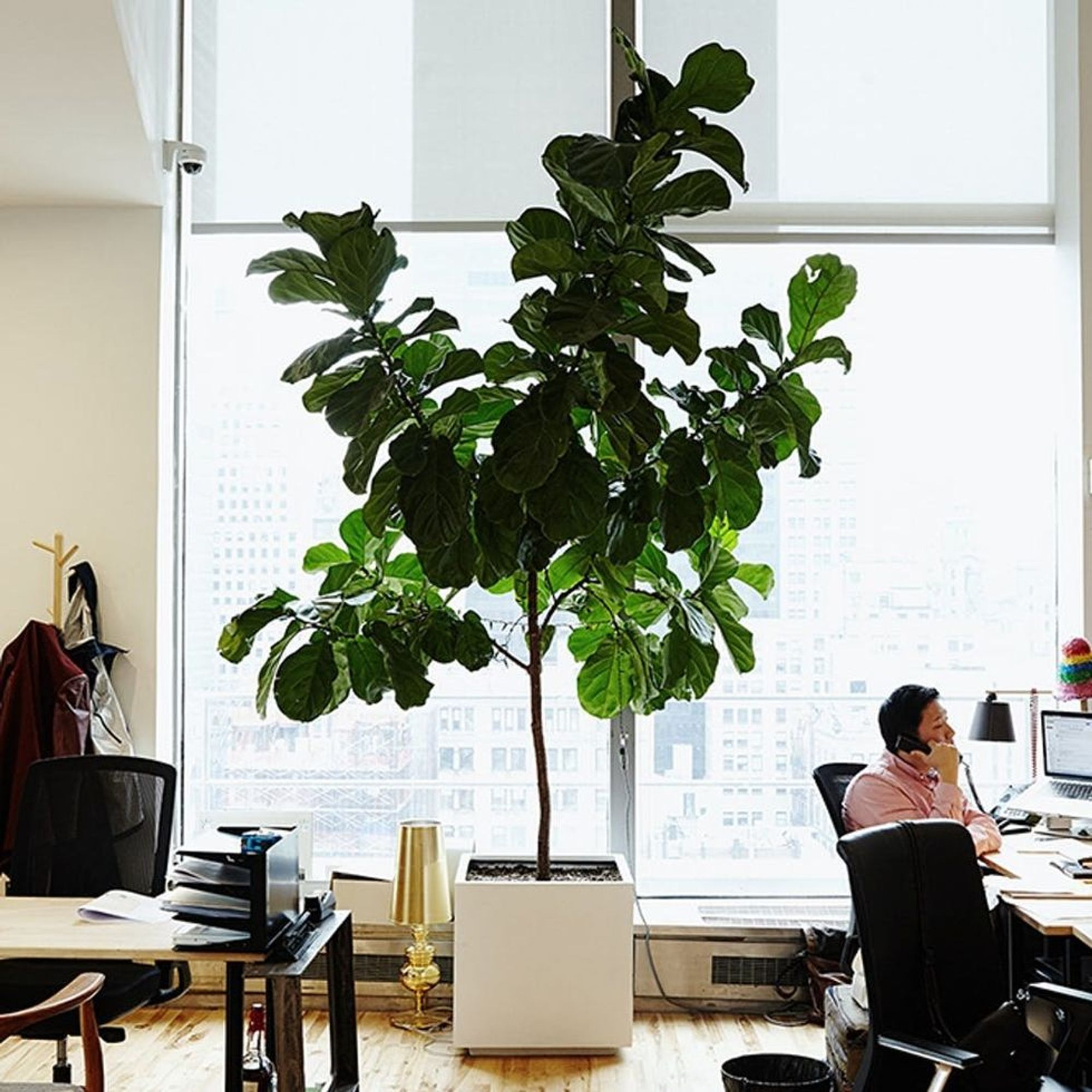 5 Indoor Plants With Air Purifying Benefits Brit Co
