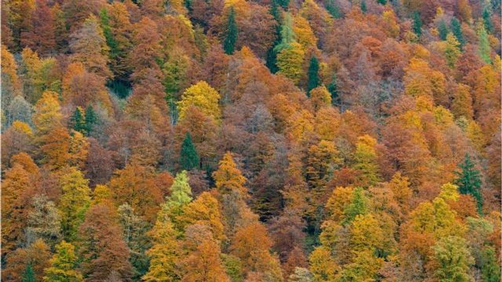 Louisville neighborhoods use trees to fend off heart disease