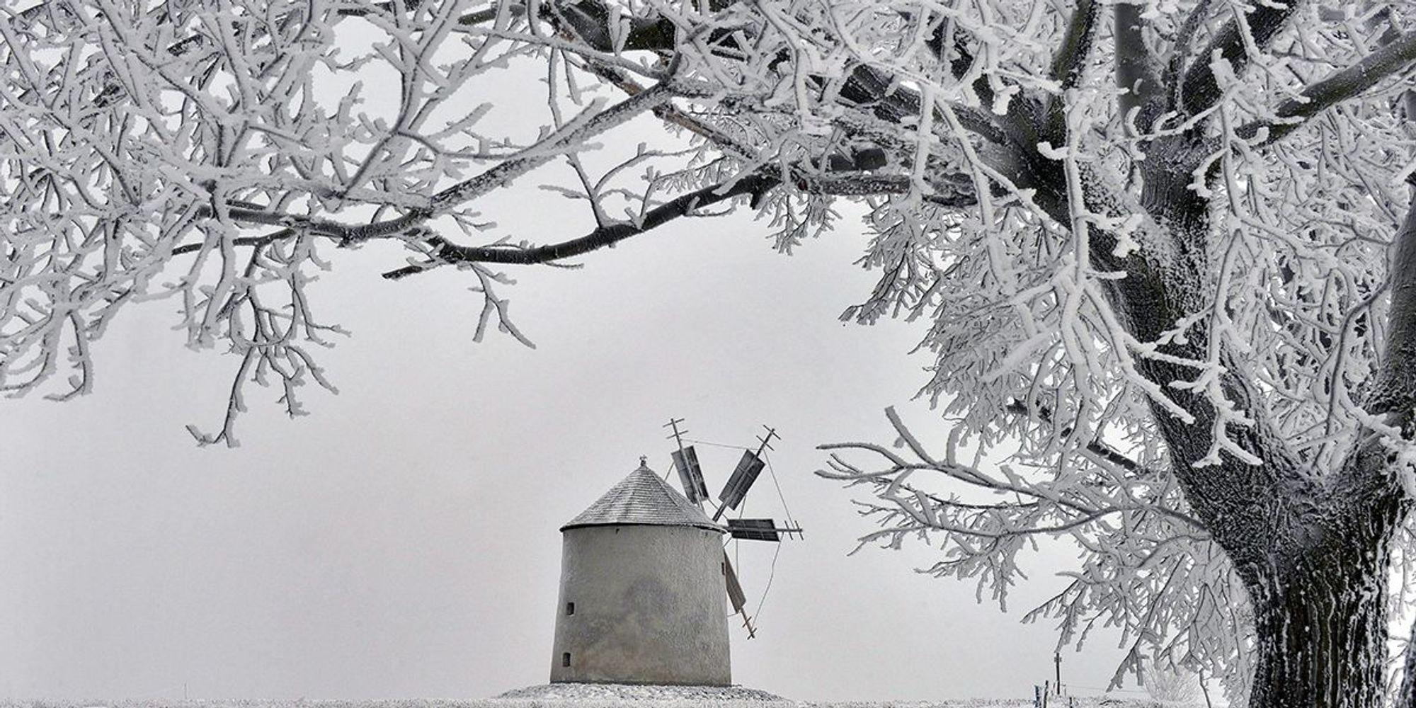 Le foto più belle della settimana - 1/8 gennaio